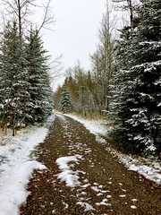 Winter wonderland (Jamie Kerr) Tags: fall autumn winter snow laves rocks nature outdoors adventure explore explorealberta sundre alberta jamesriver winterwonderland remindsmeofchristmas pine trees scenery landscape walk camping seasons weather