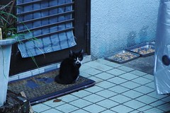 Today's Cat@2016-11-22 (masatsu) Tags: cat thebiggestgroupwithonlycats catspotting pentax mx1