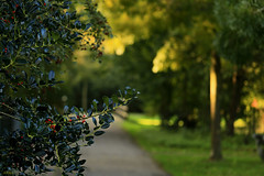 Autumn bokeh in the park. (eleni m) Tags: bokeh park autumn trees shadow light dof holly berries path grass bridge outdoor party birthday enjoying october