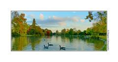 P2110527 (cowsandgirl71) Tags: panasonic fz200 france couleur reflet eau arbre automne ciel nuage vert rouge bleu beaut nature oie