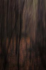 Autumn trees #3 (Paarma) Tags: lensbaby icm edge80