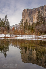 IMG_9131.jpg (Chris Murdoch Photography) Tags: black brown california californialandscapephotography chrismurdoch chrismurdochlandscapephotography chrismurdochphotography cliffs colors copyrightchrismurdoch elcapitan elcapitanreflections fineart fineartphotography granite green landscapephotography landscapes mercedriver mountains nationalparks nature places reflections river rivers snow things titlesyosemite trees usa water white yosemite yosemitenationalpark yosemitevalley