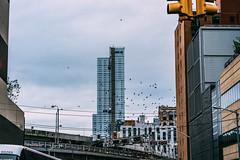 Newbery Rosario Follow me on Instagram: @newbery_ (newberynyc) Tags: nyc new york city photography photographers artists jersey sonyalpha sony a7ii sonyimages alpha collection radarplz newberynyc streetdreamsmag thosenewyorkstreets street newbery rosario leica summicronm 50mm autumn