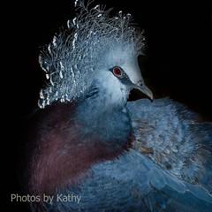 DSC_2131_edited-4s (Photos by Kathy) Tags: cincinnatizoo animals zoo zoos nature kathymoore nikon2000 bird