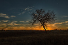 Lone Tree (mclcbooks) Tags: tree silhouette sunrise dawn daybreak clouds sky morning fall autumn chatfieldlakestatepark lakechatfield colorado landscape