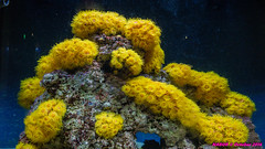 Atlanta, GA Aquarium (nabobswims) Tags: aquarium atlanta ga georgia lightroom midtownatlanta nabob nabobswims sonya6000 unitedstates us