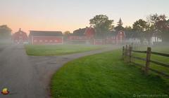 Misty Red Barns - Foggy Morning at Knox Farm, East Aurora (DTD_0236) (masinka) Tags: knox farm eastaurora ny newyork red morning fog foggy green grass colors twilight daybreak rural countryside fence buffalo wny 716 westernnewyork road path split fork cool etbtsy