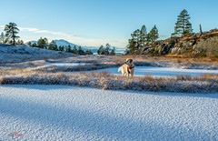 Sunday walk (NerlandO) Tags: nature winter snow trees view scenery landscape ice dog nikon d600 sun automn mountains norway
