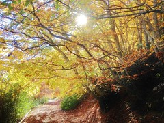 Fall hiking in Verdon forest, France (sebas.herm) Tags: magiclight automne autumn fall hiking forêt forest verdon