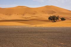 Merzouga #3 (Matthew on the road) Tags: merzouga marocco maroc september 2016 september2016 travel travelling matthewontheroad road roadto roadtomerzouga desert sun