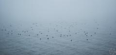 Vogel in de Mist (PaaulDvD) Tags: netherlands holland pays bas marken volendam waterland water sun sky colors typical fog light outside