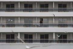The man who watched the birds (- Cajón de sastre -) Tags: lío20 patterns patrones ship barco cruise cruiseship man gaviota gaviotas seagull terrazas nikond500 nikkor70200mmf28gvrii