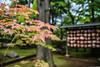 Japan nature (Audrey_Lamy) Tags: japan japon nature tokyo flore temple priere religion feuille tree arbre color couleur fullcolor colorful colorlife