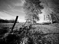 Campagne picarde (steph20_2) Tags: panasonic gh3 lumix m43 714 monochrome monochrom campagne countryside picardie oise noir noiretblanc ngc paysage blanc black bw white skanchelli