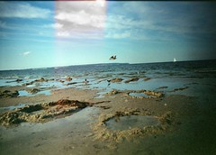 Fly high.  #befree #staywild #fly #high (kris erb) Tags: sea sun bird film analog 35mm germany freedom fly high sand rugen instagramapp