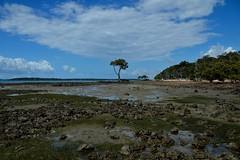 DSC_0027 (4) (RUMTIME) Tags: mangrove queensland coochie coochiemudlo