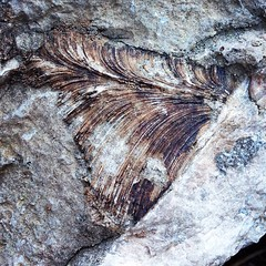 Fossil!