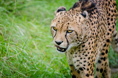 Anglų lietuvių žodynas. Žodis young carnivore reiškia jauni carnivore lietuviškai.
