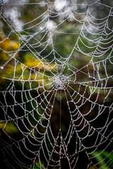 web (Steve J Cottis) Tags: park fog web dartford tokina1116mm28 brooklandslake nikond5300