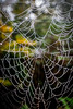web (Steve J Cottis) Tags: park fog web dartford tokina1116mm28 brooklandslake nikond5300
