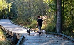 42/52 My son walking Skippy and Andy (Bella Lisa) Tags: georgia boardwalk suwanee skippy greenwa 52weeksfordogs 52wfd suwaneecreekgreenway