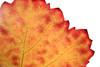 """leafscape"" (Axxolotl) Tags: autumn fall texture nature colors leaves closeup germany leaf vineyard colorful colours herbst natur autumnleaves autumncolours fallfoliage colourful bunt viticulture herbstlaub badenwürttemberg weinblatt weinberge vineleaf weinbau herbstfarben viniculture weinstadt"