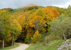 La strada che porta alla vetta (anto_gal) Tags: alberi strada firenze toscana autunno montagna bosco casentino arezzo pratomagno valdarno 2015 lorociuffenna