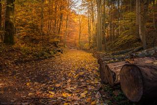 Harz - Herbst