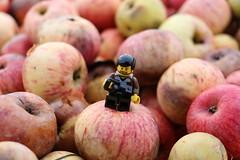 Dans les pommes (pylote) Tags: de la lego autoportrait bretagne bosse aventure lgo