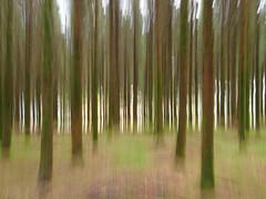 PB031831 (ernsttromp) Tags: belgium olympus pen epl3 microfourthirds mft m43 mirrorless 4x3 mzuiko 1442mmf3556 2015 abstract nature motion forest ardennes luxemburg mingthein trees