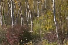 Riflessi sull'Acqua - Water Reflections (fotografia per passione) Tags: autumn herbst arno autunno riflessi waterreflections valdarno castiglioncello laterina riflessisullacqua alcedoambiente riservanaturaledellavalledellinfernoebandella marksoetebierphotography parconaturaledellarno arnonaturalpark parconaturaledellavalledellinfernoebandella