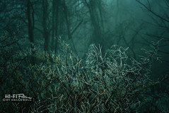 Frosty Morning (Hi-Fi Fotos) Tags: morning trees winter mist cold ice nature fog forest frozen xpro woods nikon frost silent branches freezing dreamy stark twigs chill d5000 hallewell hififotos