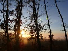 Keszthely, Hungary (kulicsg) Tags: trees mist nature fog forest landscape europe hungary outdoor keszthely