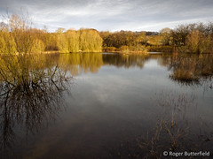 Barrow Colliery LWS (Roger B.) Tags: pond flood unitedkingdom barnsley southyorkshire gbr lws localwildlifesite barrowcolliery seasonalinundation