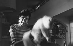 Cat Judge - Curitiba, Sept/2014 (r_kargov) Tags: film analog canon ae1 11 d76 expired mins ilford fp4 50mmf18 f135 pakon
