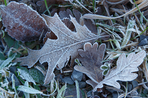 Frost at the wayside
