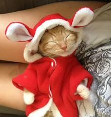 Good night, Santa Claus :-) (Dona Minúcia) Tags: red cute art animal yellow colo cat arte vermelho amarelo gato fantasia santaclaus papainoel fofo dormindo gracinha phantasy