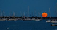 Moonrise in Sheepshead Bay # 2 ( drunkcat) Tags: fullmoon moonrise sheepsheadbay yachts