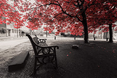 Under the red tree (Brbelly) Tags: red tree autumn selective colour bench black white newcastle upon tyne quayside
