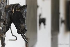 Stables (fjprieto71) Tags: stables cuadras establos horses caballos andalucia amarradero mooring amarrecabezadecaballo horseheadmooring pacoprieto fjprieto71 canon f63 70mm medinasidonia cadiz spain españa