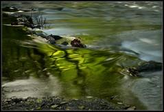 Afternoon Reflections (Ernie Misner) Tags: polarizingfilter polarizer washington erniemisner hoyahd3 creek chamberscreek reflections nikon d800 lightroom nik capturenx2 cnx2 f8andbeonthecreek