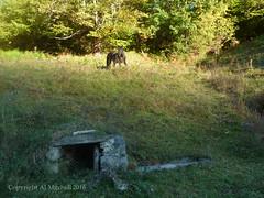 Houn, water trough: horse. (AJ Mitchell) Tags: houn fridge field rural horse farm cheval trough permaculture