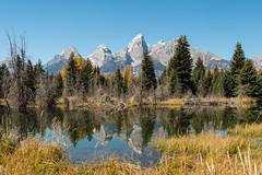 Schwabacher's Landing (greggohanian) Tags: grandtetons tetons snakeriver mountains river reflections foliage autumn beaverdam beaverlodge
