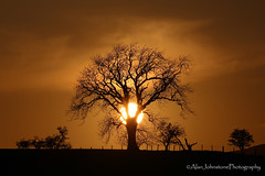 Praise The Sun (ajp~) Tags: rothbury northumberland england sun sky clouds sunset silhouette tree hedge fence glow canon 6d canon70300mmf456l alanjohnstone