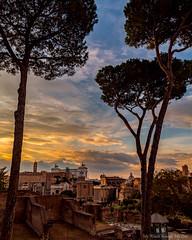 Rome Skyline from Palatine Hill (MyWorldThroughMyLens) Tags: roma lazio italy it sunset lowsun trees skyline palatine