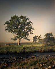Loch Eil (Roksoff) Tags: lochlinnhe coran onich fortwilliam water trees forestry pine larch misty fog landscape sea scottishhighlands scotland lochaber coranferry nikond810 nikond800 70200mmf28 autumn locheil mist leefilters loch eil