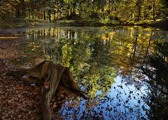 Druid Loch (TrotterFechan) Tags: drumlanrig estate woods lochs autumn fall