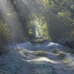 Une flaque de lumière * (Titole) Tags: mist sunrays path sunlight titole nicolefaton squareformat friendlychallenges