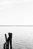 Sticks (lorenzoviolone) Tags: agfascala200 bw blackwhite blackandwhite d5200 dslr monochrome nikon nikond5200 reflex vsco vscofilm clearsky clouds grainy hills horizonontheland lake sky sticks streetphoto streetphotobw streetphotography walk:trevignano=10162016 water trevignanoromano lazio italy