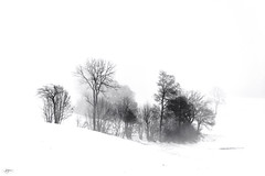 DSC_4520-Edit(B&W_Oil)FAA (john.cote58) Tags: seasons winter snow landscape cold tree trees field farm valley switzerland europe alps swiss interiordesign design theme ski skiing crosscountry fog outside outdoors blackandwhite monotone weather creativeedit